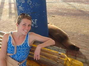 Sea lion on a bench