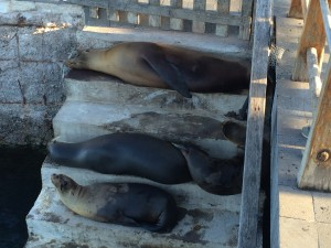 staircase of sea lions