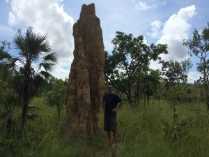 Tall termite mounds!